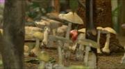 Den Pilzen auf der Spur...